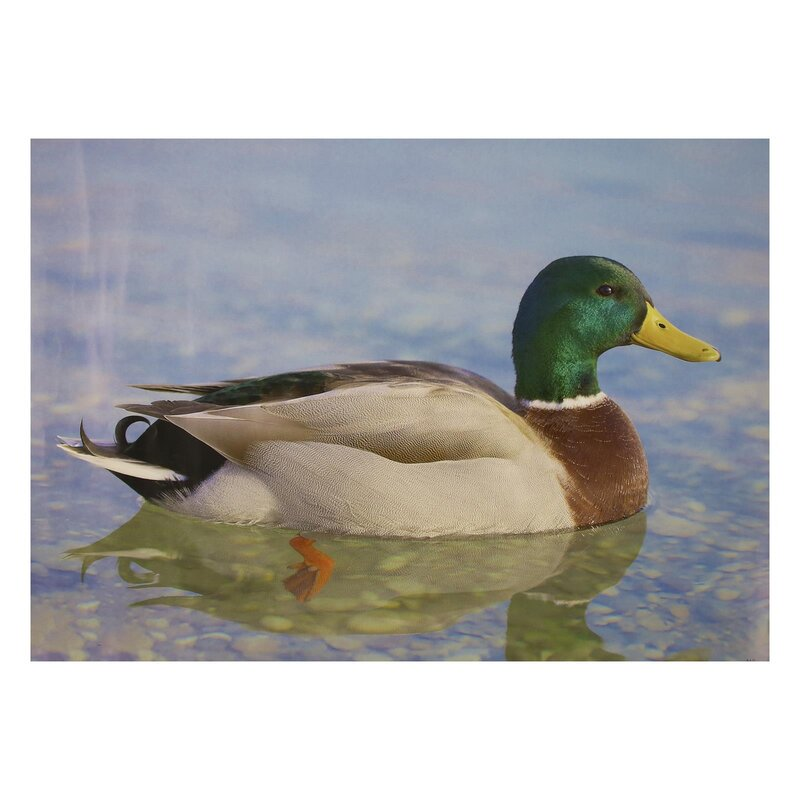 STRONGHOLD Animal Target Face - Duck II - 30 x 42 cm - hydrophobic / tear-resistant