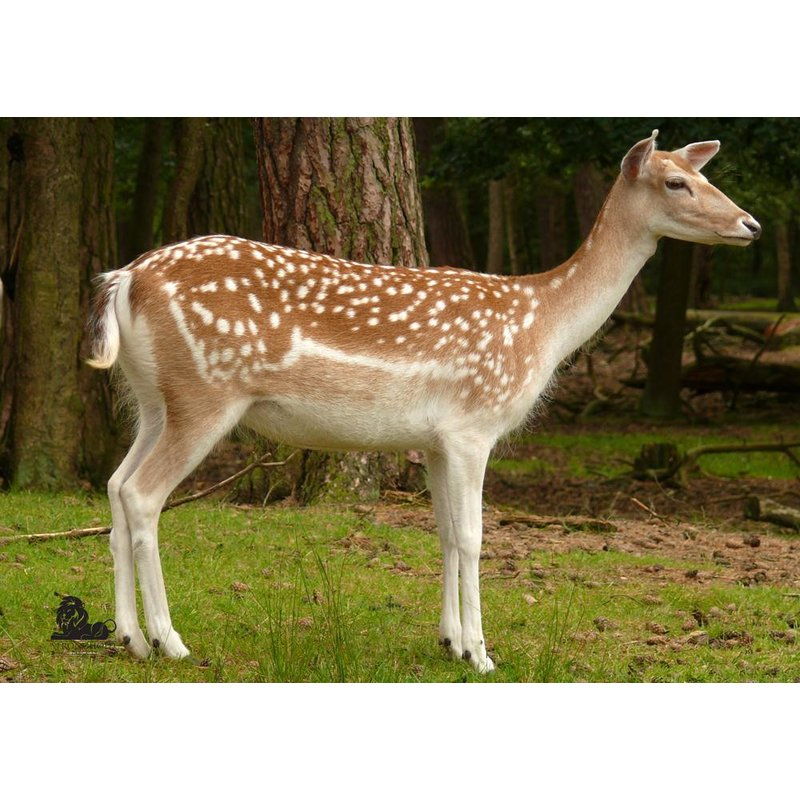 STRONGHOLD Animal Target Face - Fallow Deer II - 59 x 84 cm - hydrophobic / tear-resistant